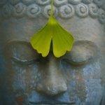 Meditation Santosha
