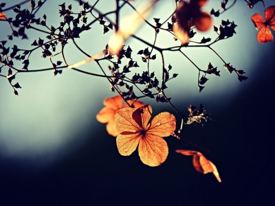 How to Let Go of Summer and Celebrate Autumn – Practice Ayurvedic Rituals to Transition with Ease